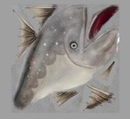 Cod texture