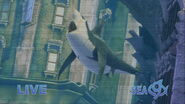 Shark-tale-disneyscreencaps com-6377