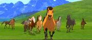 Spirit.herd