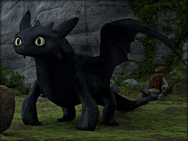 Toothless How To Train Your Dragon 32987234 800 600