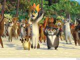 Lemurs/Gallery