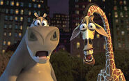 Gloria-and-Melman-gloria-the-hippopotamus-24316192-360-226