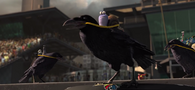 The Crows Standing Defeat