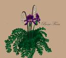 Bone Fern (carnivorous plant)