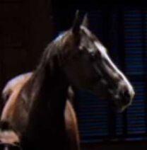 Bad Horse
