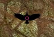 Phoenixhome