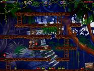 Jungle n secret8