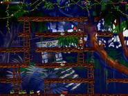 Jungle secret7