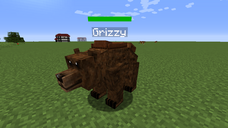 Grizzly bear chest
