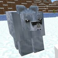 Polar bear old model