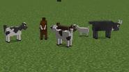 Goat skins