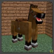 Buckskin horse
