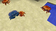 Blue and orange crabs