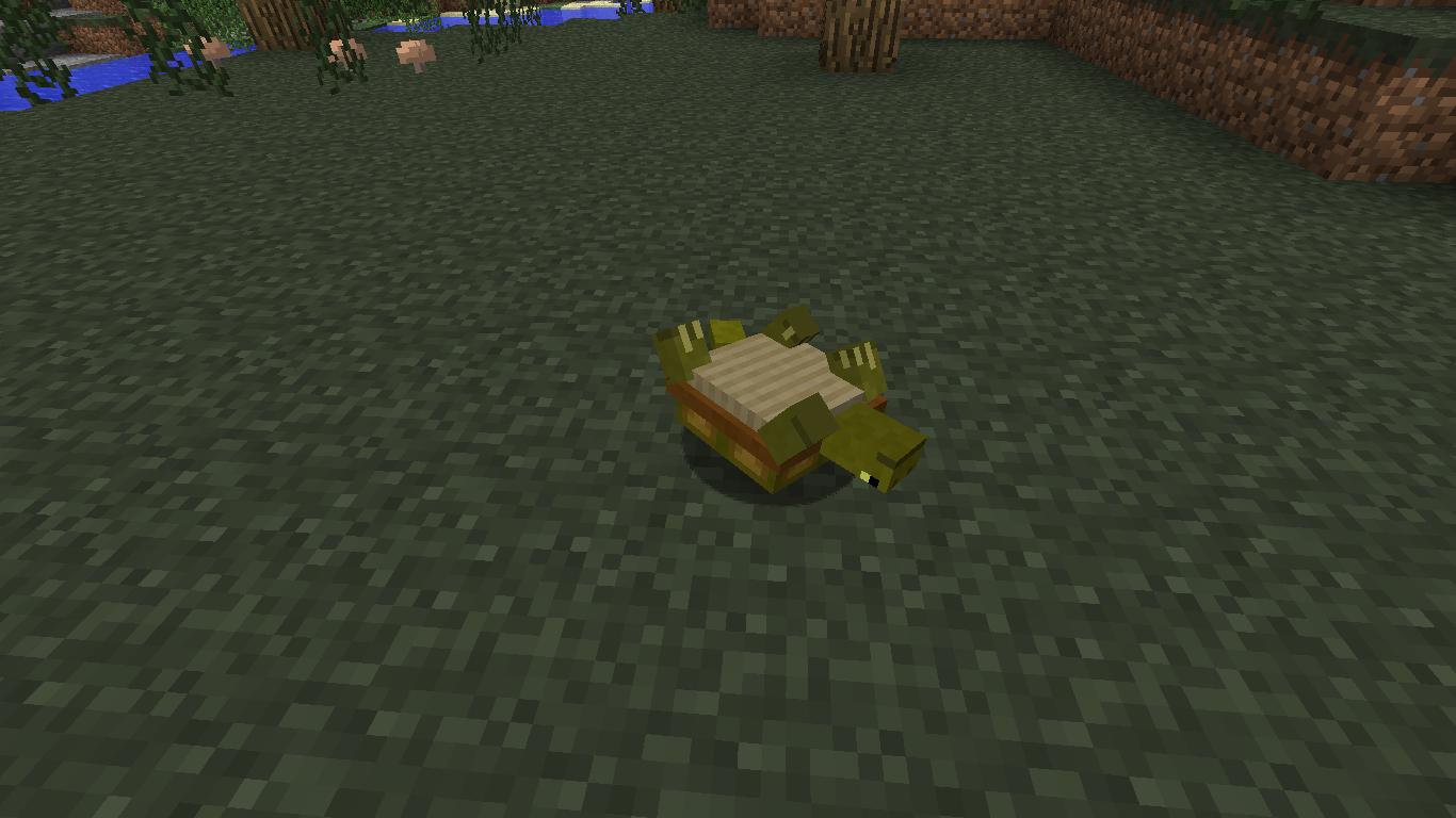 Turtle Mo Creatures Wiki Fandom Powered By Wikia
