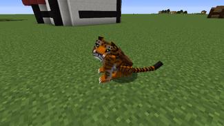 New tiger sitting