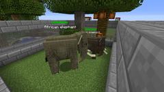 Elephants-0