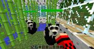Tamed pandas