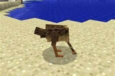 Ostrich in sand