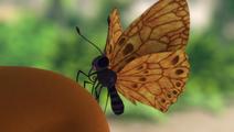 Dan the Butterfly.jpg