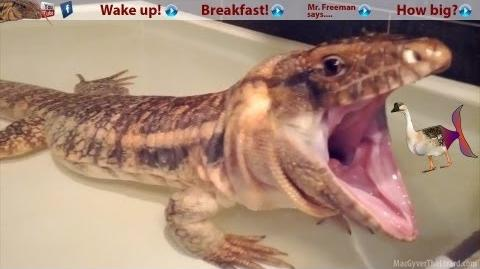 ☜ Waking up the Dragon