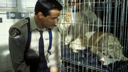 Constable Benton Fraser Diefenbaker Cage Victoria's Secret 2