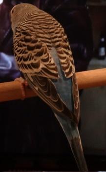 File:Petey the bird.jpg