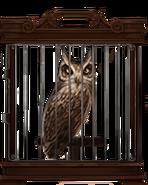 MM Screech Owl
