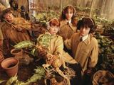 General RP:Herbology2