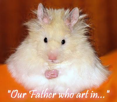 Praying hamster