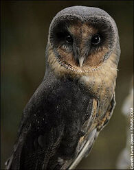 Owlwb