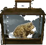 MM Natterjack Toad