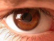 Brown Eye 4