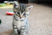 Jaeslya cat