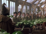 General RP:Herbology