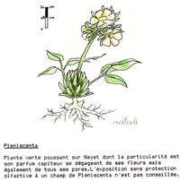 Pleniscenta-1