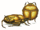Beetle (4e Monster)