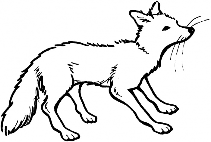 Fox 7 Coloring Pages Com