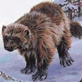 Dire wolverine
