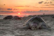 Turtle-69600 640
