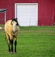 Horse-449049 640