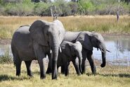 Elephant-55255 640