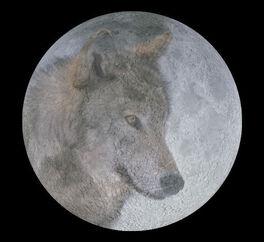 Wolf moon big