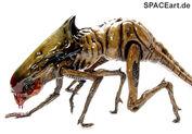 Alien 3 queen chestburster modell bausatz halcyon-b