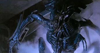 Aliens-11