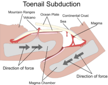 Toenail Subduction Diagram