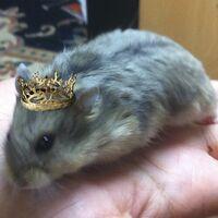 4. Aemon Targaryen
