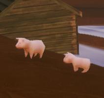 Dwarrows pigs
