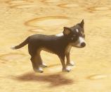 Dwarrows Shepherd Puppy