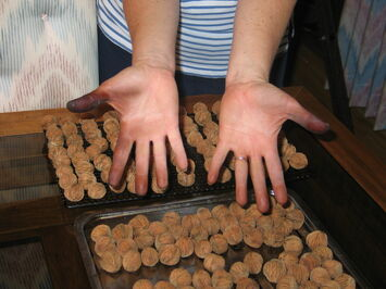 Hands after hulling 500 black walnuts-1-