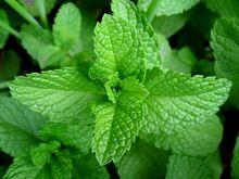 Mint-leaves-2007-1-
